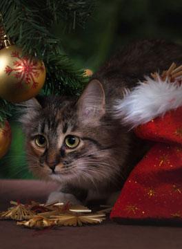 Cat under Christmas tree